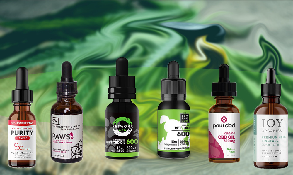 Treating Canine Separation Anxiety With CBD Oil for Dogs and Cats